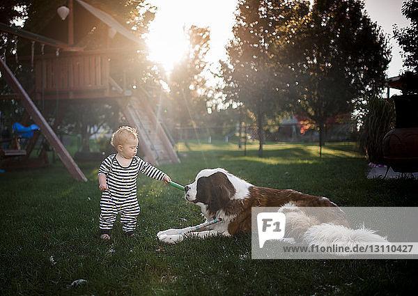 Kleiner Junge spielt mit Hund auf dem Spielplatz Kleiner Junge spielt mit Hund auf dem Spielplatz