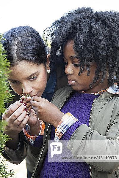 Teacher with student examining plants in nursery