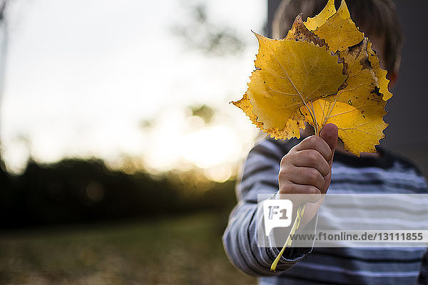 Junge hält Ahornblätter  während er im Hinterhof steht