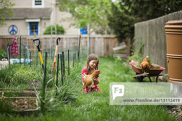 Girl playing with chicken while kneeling on grassy field at yard
