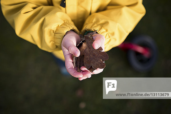 Low section of girl holding dry leaves in hands