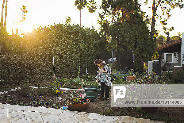 Girl looking at plant while standing in yard during sunset