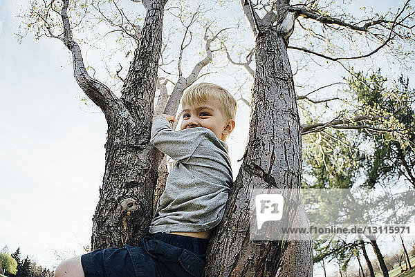 Low angle view of smiling boy sitting on tree against clear sky