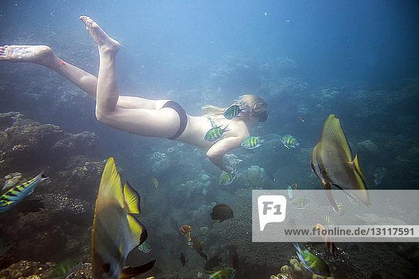 Im Meer schwimmende Frau