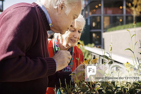 Glückliches älteres Ehepaar untersucht Blumen