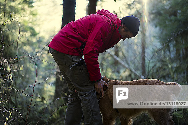 Side view of hiker playing with Golden Retriever in forest