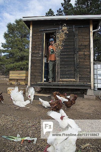 Man looking at hens while standing in cabin