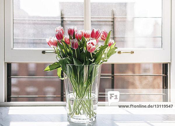 Fresh tulips in vase on window