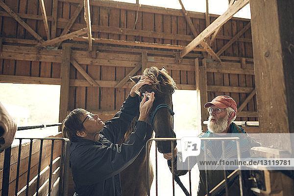 Mann sieht eine Ärztin an  die ein Pferd im Stall untersucht