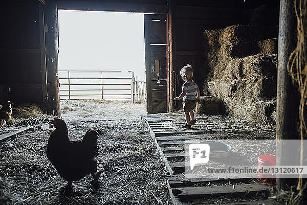 Side view of baby boy standing in barn