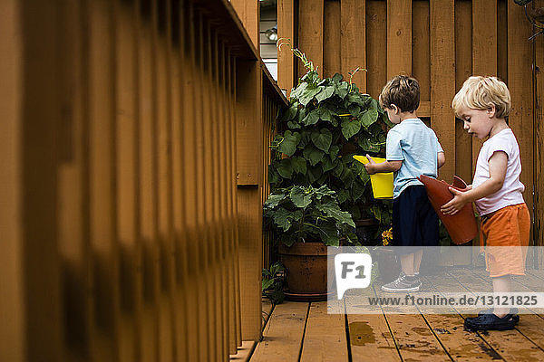 Brüder gießen die Pflanze  während sie auf der Veranda stehen
