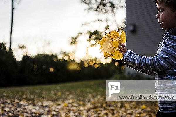 Junge hält Ahornblätter  während er bei Sonnenuntergang im Garten steht