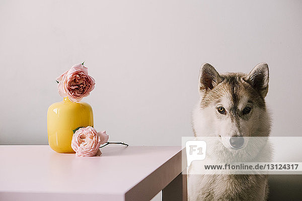 Porträt eines an einer Blumenvase sitzenden Hundes an der Wand Porträt eines an einer Blumenvase sitzenden Hundes an der Wand