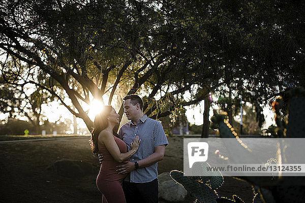 Romantisches Paar  das sich bei Sonnenuntergang im Park an Bäumen steht und einander anschaut