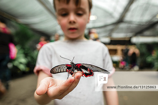 Curious boy holding butterfly