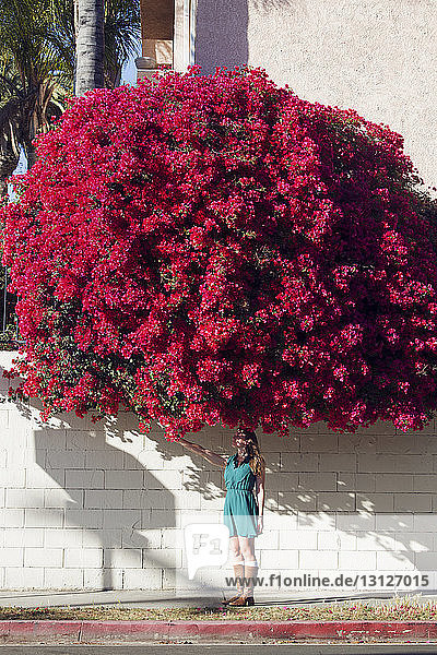 Frau steht unter Bougainvillea-Baum