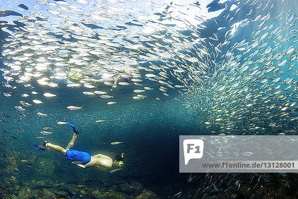 Couple swimming by fishes underwater