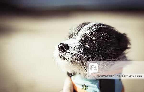 Nahaufnahme eines im Freien stehenden Hundes Nahaufnahme eines im Freien stehenden Hundes