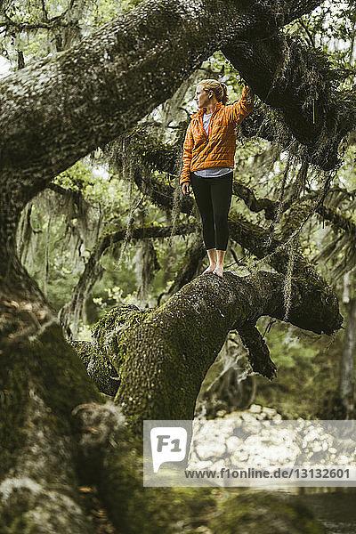 Junge Frau steht auf moosbedecktem Ast im Regenwald