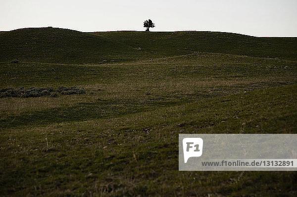 Szenische Ansicht einer grünen Landschaft vor klarem Himmel