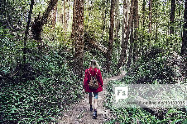 Rückansicht einer Frau  die auf einer Straße inmitten von Bäumen im Wald geht
