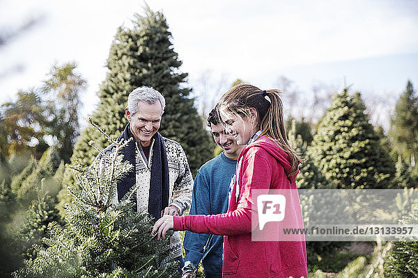 Man with grandchildren examining pine trees in farm