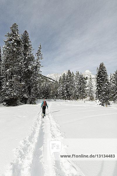 Rückansicht einer Frau mit Skiern  die auf einem schneebedeckten Feld im Wald spazieren geht