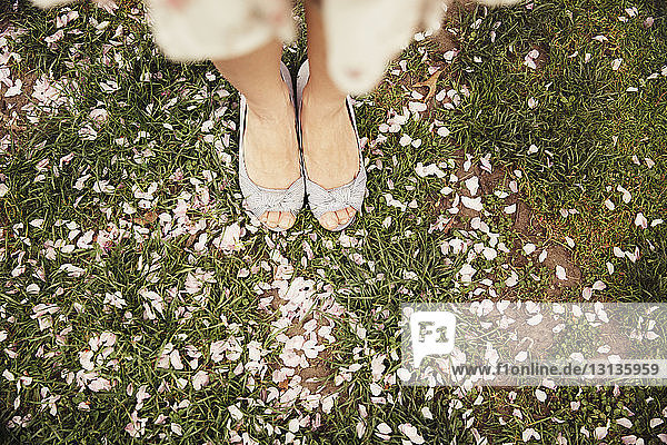 Low section of woman standing on field with flower petals