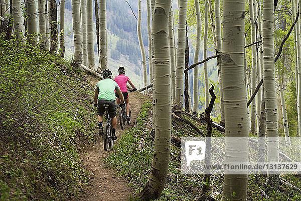Rückansicht von Radfahrern  die im Wald Rad fahren