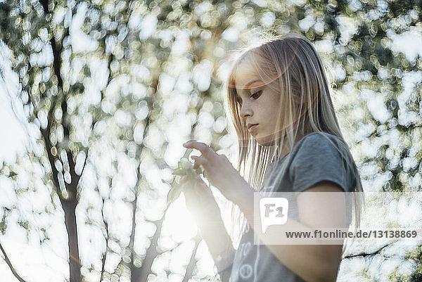 Seitenansicht eines Mädchens  das eine Blume hält  während es am Baum steht