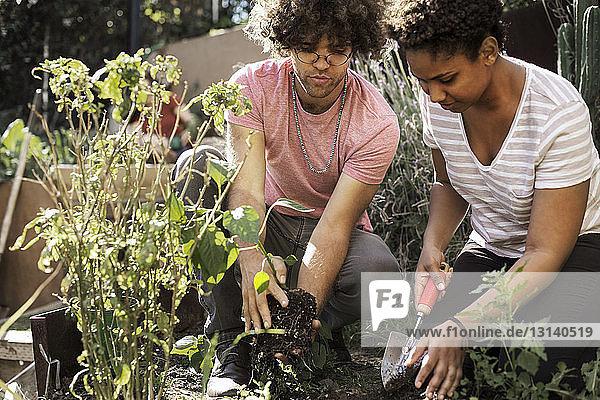 Mann und Frau pflanzen gemeinsam im Gemeinschaftsgarten