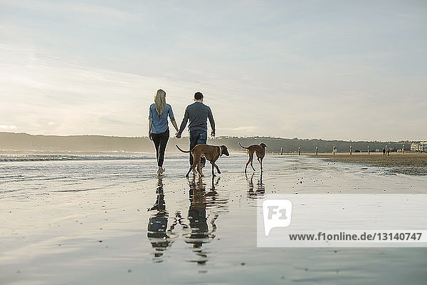 Rear view of couple holding hands while walking with dogs on shore at beach