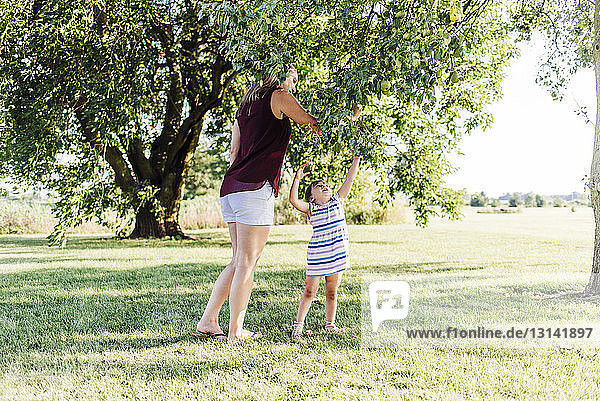Mother with daughter picking apples from tree while standing on grassy field
