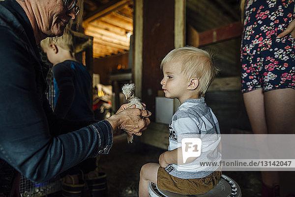 Großmutter zeigt Enkelkindern im Stall Küken