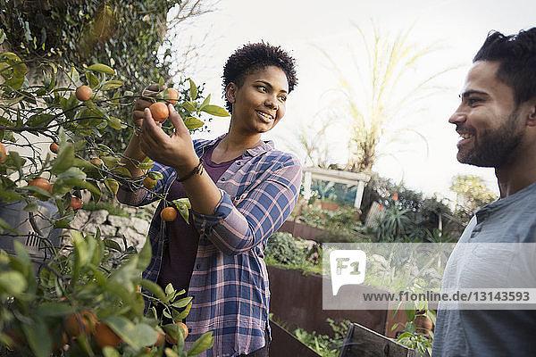 Glückliche Frau zeigt Freundin frische Orangen im Gemeinschaftsgarten