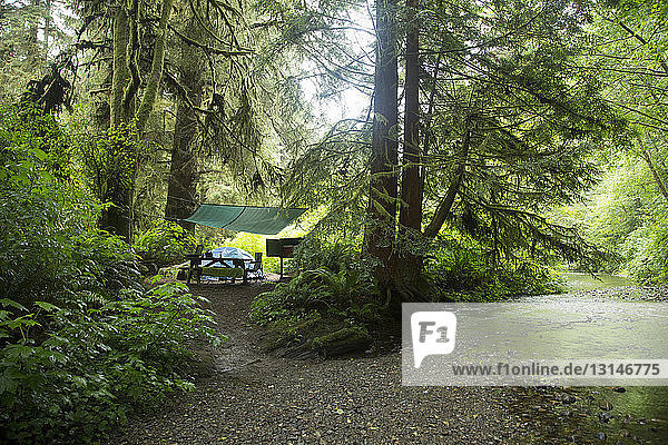 Camp  Redwoods National Park  California  USA