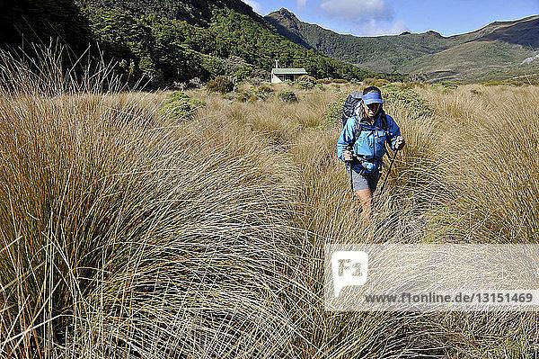 Mid adult woman hiking through Kahurangi National Park  New Zealand