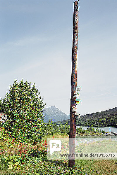 Birdhouses on telephone pole  Seward  Alaska