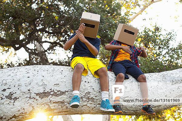 Zwei Brüder sitzen auf einem Ast eines Parkbaums mit Pappkartons auf dem Kopf