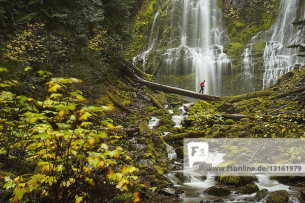Male hiker crossing tree trunk over Proxy Falls  Oregon  USA