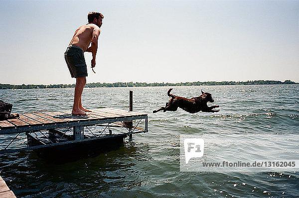 Junger Mann beobachtet Haushund  der vom Pier ins Wasser springt