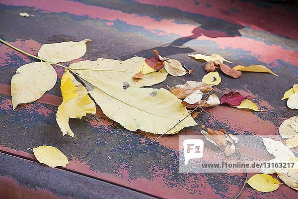 Herbstblätter auf der Motorhaube eines verwitterten roten Pickup-Trucks