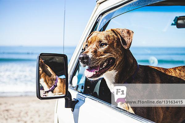 Haushund im Wohnmobil sitzend  Fenster unten