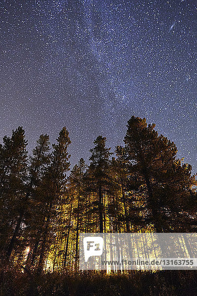 Trees and starry sky  low angle view  Lake Louise  Alberta  Canada