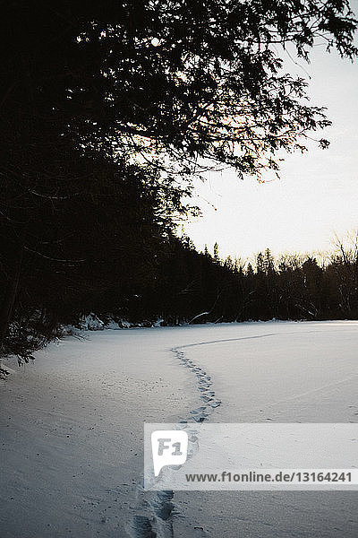 Footprints in snow along edge of forest,  Omemee Ontario Canada