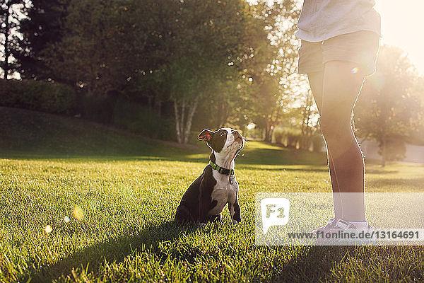 Taille eines Mädchens  das einem Boston-Terrier-Welpen das Sitzen beibringt