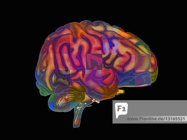 Veranschaulichung des menschlichen Gehirns als Gitter