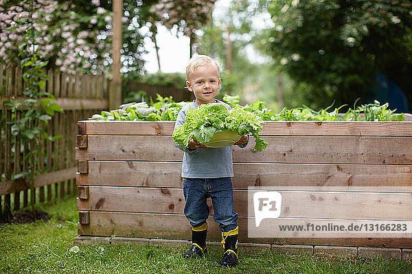 Kleinkind Junge pflückt Pflanzen im Hinterhof