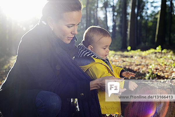 Mother and young toddler looking at tree stump