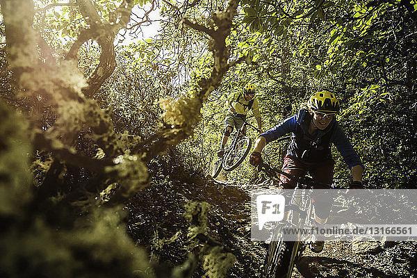 Young couple mountain biking  Soquel Demonstration State Forest  Santa Cruz  California  USA